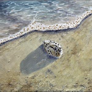 galerie venturini, JJV, mer, pholades, plage, sable