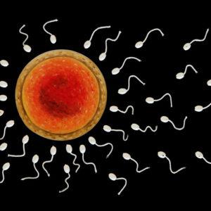 Femme, galerie venturini, JJV, ovule, spermatozoïdes