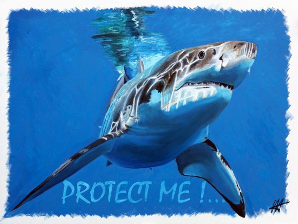 Requins, superprédateur, requin blanc, déclin des populations de requins, Espèces vulnérables, WWF, IFAW.